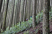 寶雲島迦納山(Mt Gardner of Bowen Island):轉為陡峭的步道