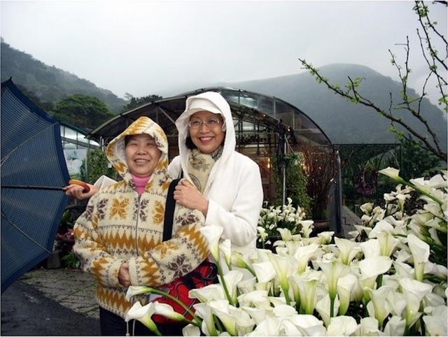 2寒雨中的竹子湖海芋.jpg - 日誌用相簿