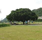 大漢溪河濱單車道:07漂亮的大樹.jpg