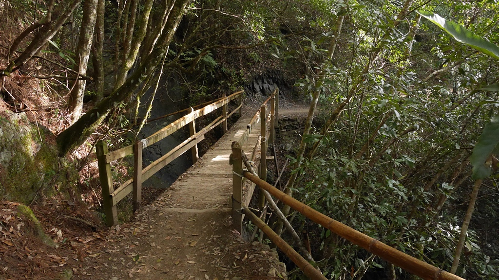 07步道上的木橋1.jpg - 司馬庫斯二日遊之三 司立富瀑布