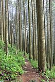 寶雲島迦納山(Mt Gardner of Bowen Island):穿梭松林的優質步道