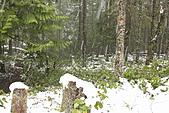 寶雲島迦納山(Mt Gardner of Bowen Island):驚見降雪