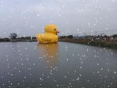 會動的照片:黃色小鴨--下雪了