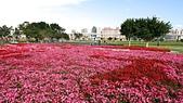 幸福水漾公園、婚紗廣場:13四季秋海棠花海2.jpg
