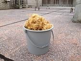 石花菜-->>石花凍:0427曬石花菜第五次3.jpg