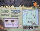 霹靂角國家公園(Point Pelee N.P.):16Woodland_Trail.jpg