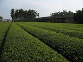 八卦台地基點巡禮:樟普寮一等點所在的茶園