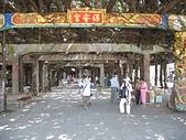 澎湖基石之旅:通樑大榕樹