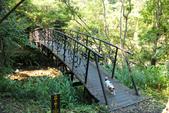 金瓜寮溪魚蕨步道:小橋