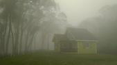 老樹農地:老樹霧景