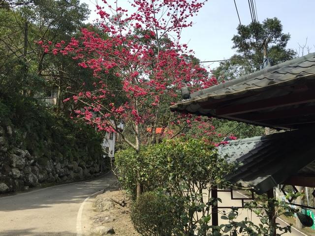 天然谷溫泉餐廳櫻花.jpg - 司馬庫斯二日遊之一