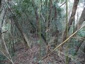 休閒旅遊:DSC03656小份坑山.JPG