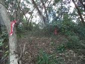休閒旅遊:DSC03726樟樹林山.JPG
