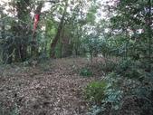 休閒旅遊:DSC03728樟樹林山.JPG