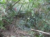 休閒旅遊:DSC03938老雞山.JPG