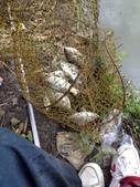 釣魚記:2014年10月17日礁溪龍龍河的釣魚成果 002.jpg