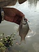 釣魚記:2014年12月30日年終封關宜蘭縣釣魚記 005.jpg