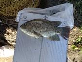 釣魚記:2014年10月16日礁溪龍龍河的6壯士 002.jpg