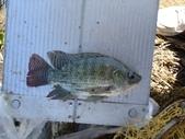 釣魚記:2014年10月16日礁溪龍龍河的6壯士 003.jpg