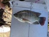 釣魚記:2014年10月16日礁溪龍龍河的6壯士 001.jpg