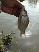 釣魚記:2014年12月30日年終封關宜蘭縣釣魚記 006.jpg