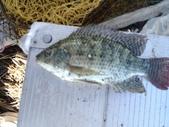 釣魚記:2014年10月16日礁溪龍龍河的6壯士 004.jpg
