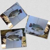 釣魚記:2014年10月16日礁溪龍龍河的6壯士 007.jpg