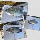 釣魚記:2014年10月16日礁溪龍龍河的6壯士 008.jpg