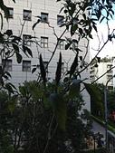小陽台農業:2013年10月11日陽台春色 016.jpg