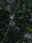 小陽台農業:2013年10月11日陽台春色 007.jpg