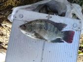 釣魚記:2014年10月16日礁溪龍龍河的6壯士 005.jpg