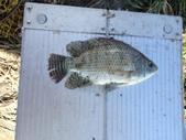 釣魚記:2014年10月16日礁溪龍龍河的6壯士 006.jpg