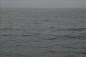 清晨.海上清水斷崖:DSC_0151