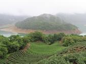 永安景觀、八卦茶園:IMG_4535.JPG