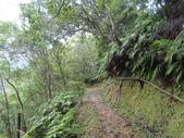 永安景觀、八卦茶園:IMG_4550.JPG