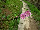 花草樹木:杏花