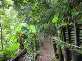 永安景觀、八卦茶園:IMG_4547.JPG