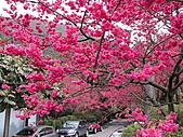 花草樹木:IMG_2614.jpg