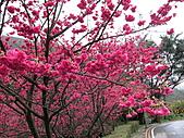 花草樹木:IMG_2615.jpg