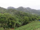 永安景觀、八卦茶園:IMG_4525.JPG