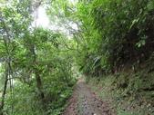 永安景觀、八卦茶園:IMG_4545.JPG