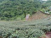 永安景觀、八卦茶園:IMG_4619.JPG