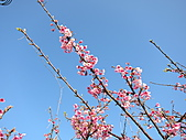 花草樹木:IMG_2354.jpg