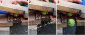 水果酒醋釀造屋:P4-脆梅DIY-3