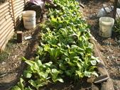 小菜園:DSCF1136.JPG