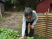 小菜園:DSC01482.JPG
