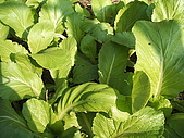 小菜園:DSCF1129.JPG