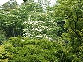 苗栗西湖:DSCF2197.JPG