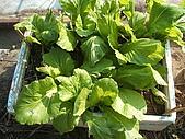 小菜園:DSCF1130.JPG