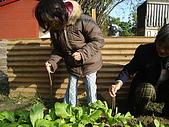 小菜園:DSC01544.JPG